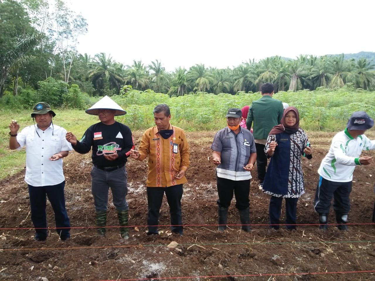 """Keikutasertaan Dekan Fakultas Pertanian (Dr. Ir. Sutan Pulungan, MSi) yang juga dosen Prodi Agribisnis, pada kegiatan """"DEMPLOT DAN TANAM PERDANA KOMODITI PORANG"""" di UPT. Benih Induk Aneka Umbi- Umbian Padangsidimpuan, bersama Komunitas Porang Amfunan Sumut, Kamis, 13 Agustus 2020"""