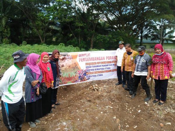 """Keikutsertaan Dekan Fakultas Pertanian (Dr. Ir. Sutan Pulungan, MSi) yang juga dosen Prodi Agribisnis, pada kegiatan """"DEMPLOT DAN TANAM PERDANA KOMODITI PORANG"""" di UPT. Benih Induk Aneka Umbi- Umbian Padangsidimpuan, bersama Komunitas Porang Amfunan Sumut, Kamis, 13 Agustus 2020"""